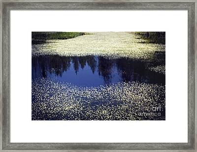 Pond Of Blooms Framed Print by Janie Johnson