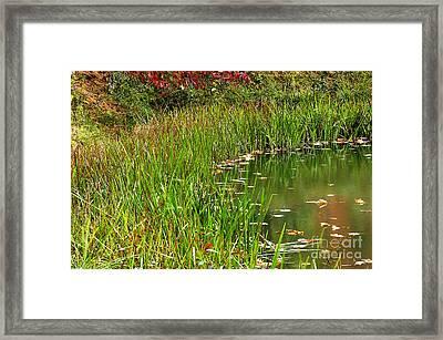 Pond Reflections Framed Print by Thomas R Fletcher