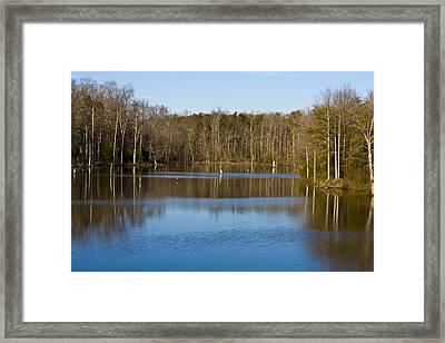 Pond Relflections Framed Print