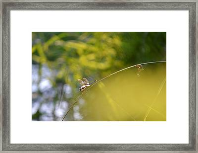 Framed Print featuring the photograph Pond-side Perch by JD Grimes