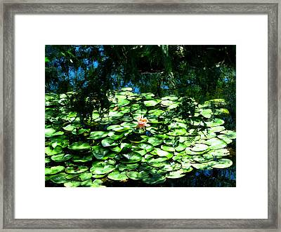 Pond With With Pond Lilly Framed Print by David Killian