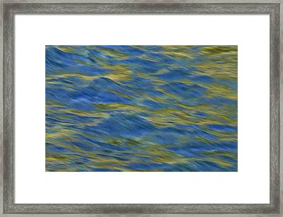 Framed Print featuring the photograph Ponderosa Abstract 2   by Sherri Meyer