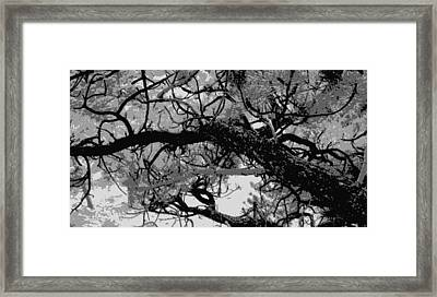 Ponderosa Pine Framed Print by Rosemarie Hakim