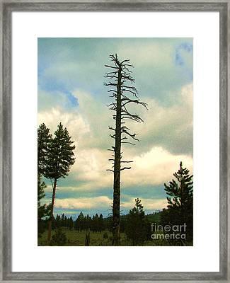 Ponderosa Pine Snag Framed Print by Michele Penner
