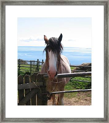 Pony At Highland Village Framed Print