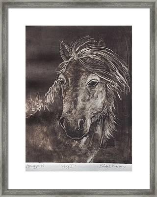 Pony II Framed Print by Barbel Amos