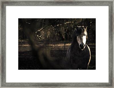 Pony In The Brambles Framed Print by Justin Albrecht