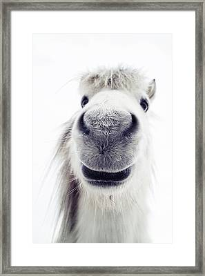 Pony Looking Into Camera Framed Print by Elke Vogelsang