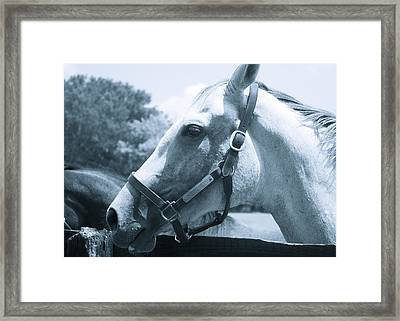 Pony Tales Framed Print by Thomas Brown