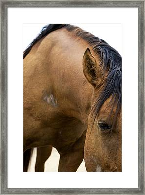 Framed Print featuring the photograph Curious Pony by Lorraine Devon Wilke