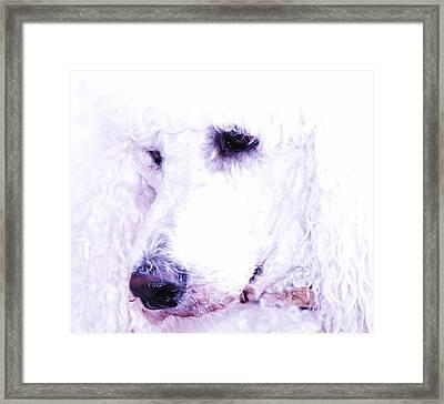 Poodle Face Framed Print