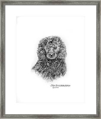 Framed Print featuring the drawing Poodle by Jim Hubbard