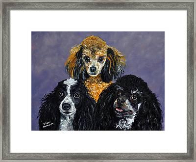 Poodles Framed Print by Stan Hamilton