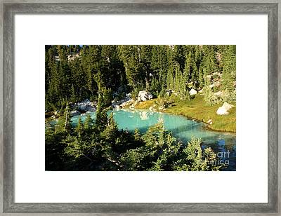 Pool In The Forest Framed Print