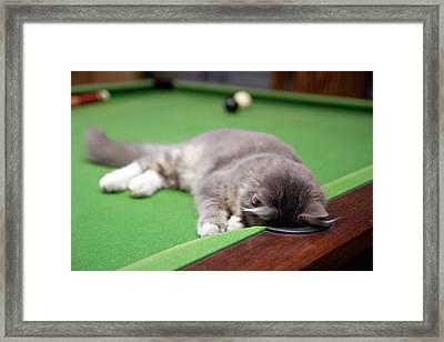 Pool Kitty Framed Print by (c) Chris Gin