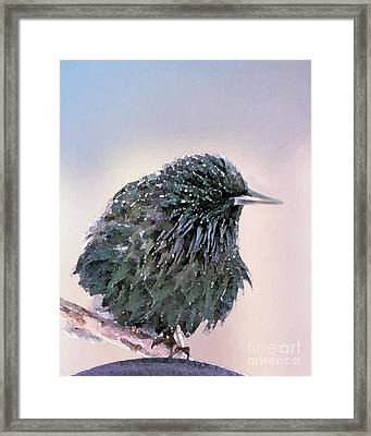 Poor Decision Framed Print by Betty LaRue