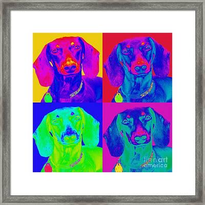 Pop Art Dachshund Framed Print by Renae Crevalle