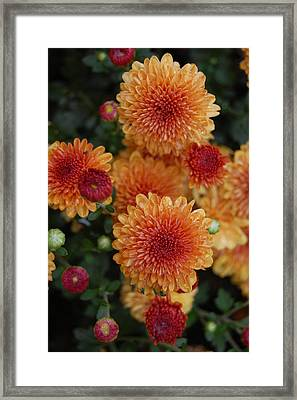 Pop Framed Print by Beverly Hammond