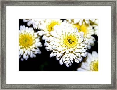 Popcorn Flowers Framed Print by Hannah Miller