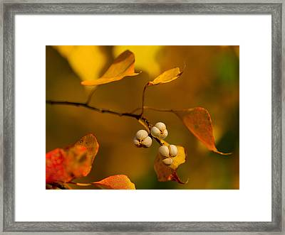 Framed Print featuring the photograph Popcorn Tree by Dan Wells