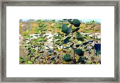 Framed Print featuring the photograph Poplar Saplings by Jim Sauchyn