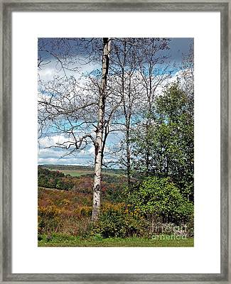 Framed Print featuring the photograph Poplar Witness by Christian Mattison