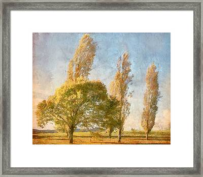 Poplars Framed Print by Margaret Hormann Bfa