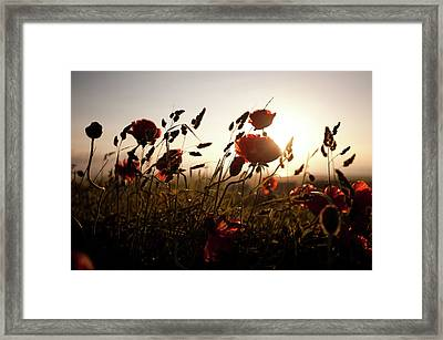 Poppies And Grasses Framed Print