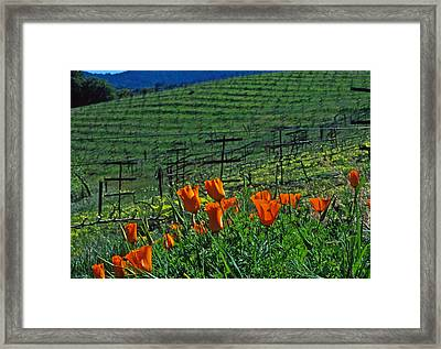 Poppies And The Vineyard Framed Print