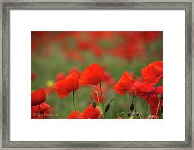 Poppies Framed Print by Copyright Wild Vanilla