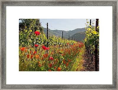 Poppies In The Vineyard Framed Print by Kent Sorensen
