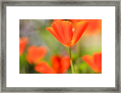 Poppies In The Wind Framed Print by Heidi Smith