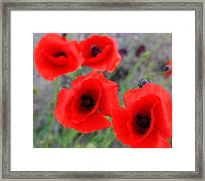 Poppies Of Stone Framed Print by Empty Wall