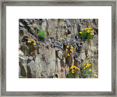 Poppies On The Cliff Framed Print