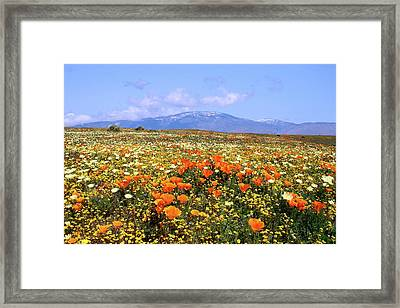 Poppies Over The Mountain Framed Print by Peter Tellone