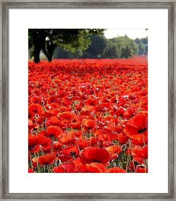 Poppies  Framed Print by Tammy Cantrell