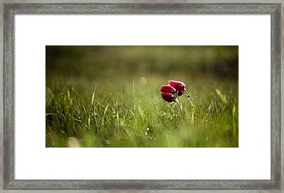 Popping Red Framed Print by Victor Bezrukov