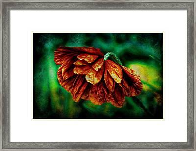 Poppy Art Framed Print by Jennifer Kosminskas