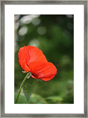 Framed Print featuring the photograph Poppy Dreams by Penny Hunt