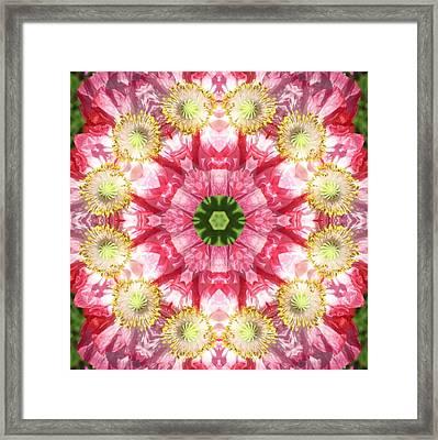 Poppy Explosion Framed Print