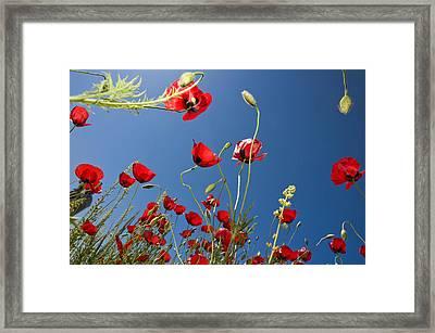 Poppy Field Framed Print by Ayhan Altun