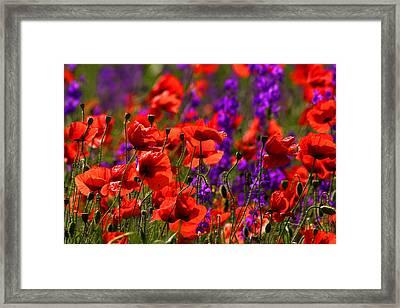 Poppy Field Framed Print by Emanuel Tanjala