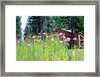 Poppy Field Framed Print by Myrna Migala