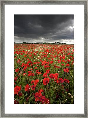 Poppy Field With Stormy Sky In Background Framed Print by Chris Conway