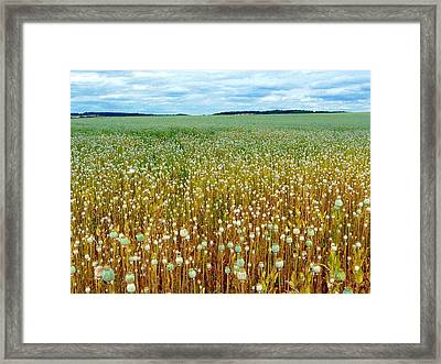 Framed Print featuring the photograph Poppy Fields Forever by Rdr Creative