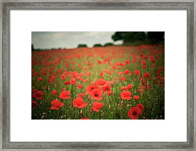 Poppy Fields Framed Print by Images by Victoria J Baxter