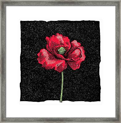 Poppy Flower, Woodcut Framed Print by Gary Hincks