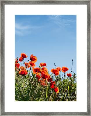 Poppy Flowers 01 Framed Print