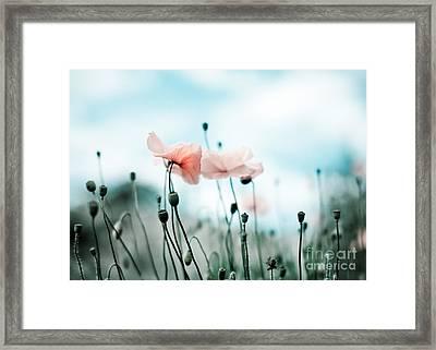 Poppy Flowers 02 Framed Print by Nailia Schwarz