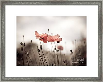 Poppy Flowers 03 Framed Print
